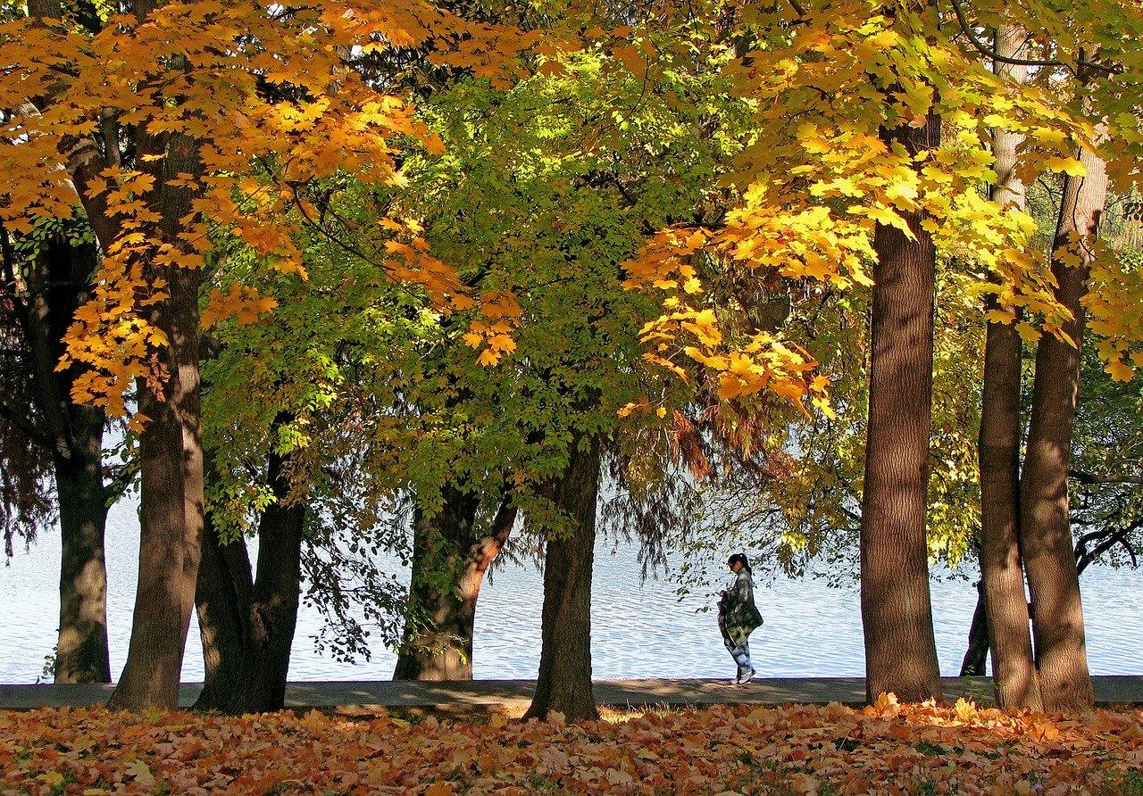 peisaj-de-toamna-in-parcul-Regele-Mihai-1-fostul-herastrau